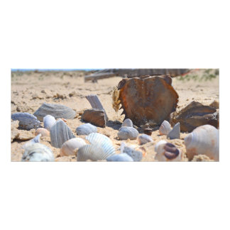 Seashells na praia por Shirley Taylor 10.16 X 22.86cm Panfleto