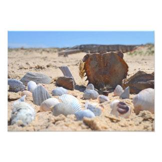 Seashells na praia por Shirley Taylor Impressão De Foto