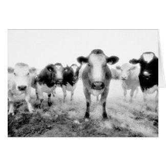 Seis cartões das vacas