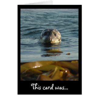 Selado com um cartão do beijo
