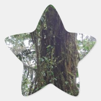 selva adesito estrela