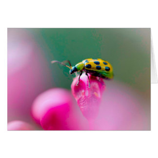 Senhora Desinsetar no cartão cor-de-rosa da flor