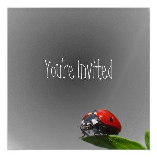 Senhora vermelha Desinsetar Folha - fundo de desva Convites