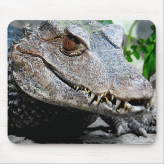 Série animal de Mousepad - Caiman do anão