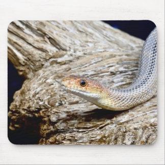 Série animal de Mousepad - cobra