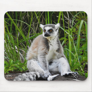 Série animal de Mousepad - Lemur Anel-Atado