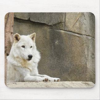Série animal de Mousepad - lobo branco