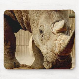 Série animal de Mousepad - rinoceronte