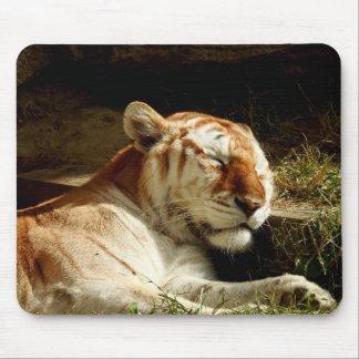 Série animal de Mousepad - tigre do sono