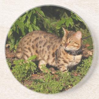 Série do gato---Gato do savana do Serval---Porta c Porta Copos De Arenito