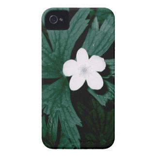 Série flor branca capinhas iPhone 4