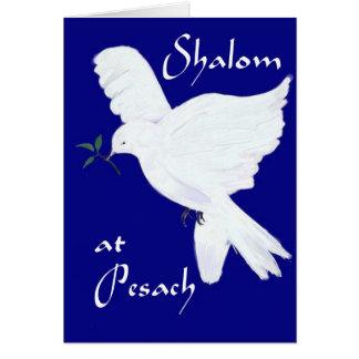 Shalom em Pesach! - Pomba branca da paz Cartão