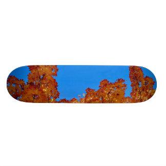 Shape De Skate 18,7cm Limites esticados