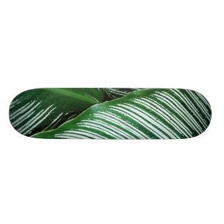 Shape De Skate 19,7cm As folhas tropicais verdes com branco listram o