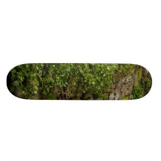Shape De Skate 19,7cm Parede da hera
