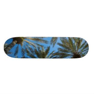 Shape De Skate 20,6cm Guarda-chuva das palmeiras