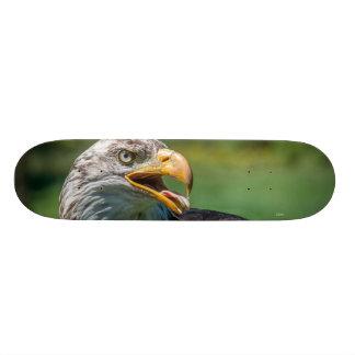 Shape De Skate 21,6cm fotografia de águia