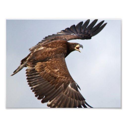 Shouting da águia americana alimenta-me em um pai artes de fotos