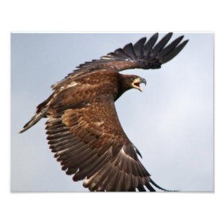Shouting da águia americana alimenta-me no pai impressão de foto
