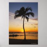 Silhueta de uma palmeira por um por do sol alaranj impressão