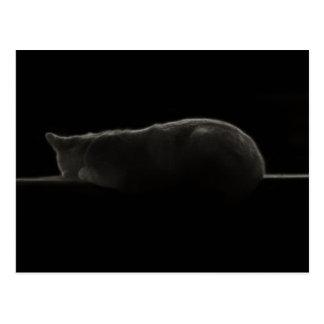 Silhueta do gato cartão postal