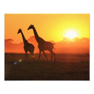 Silhueta do girafa - funcionamento da liberdade impressão de foto