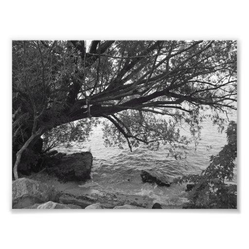 Silhueta preto e branco da árvore impressão de foto