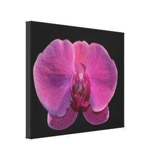 Simplesmente impressões das orquídeas