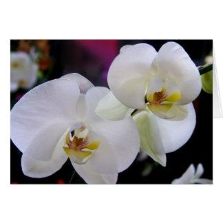 Simplesmente orquídeas cartão comemorativo