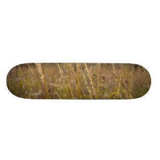 Skate Através das partes superiores da grama