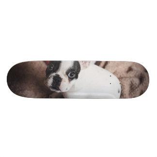 Skate Cão de Papai Noel - pug engraçado - persiga claus