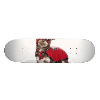 Skate Cão do libre de Lucha, chihuahua engraçada,