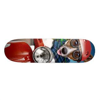 Skate Cão do patinete, jaque russell
