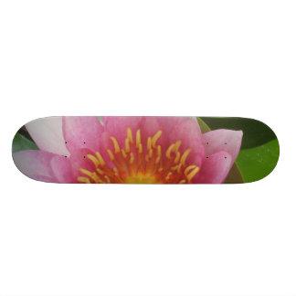 Skate cor-de-rosa do lírio