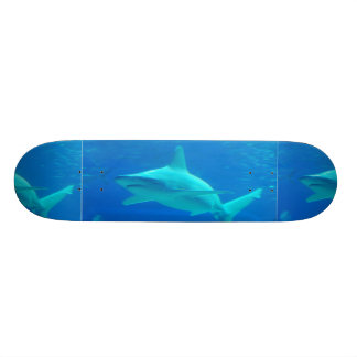 Skate da natação do tubarão