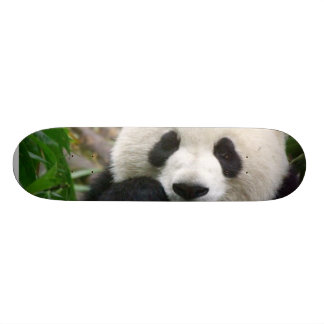 Skate da panda