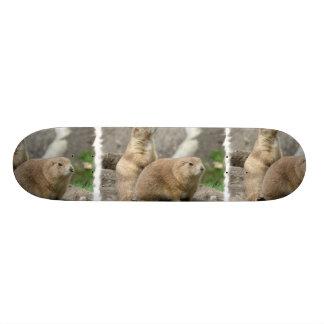 Skate engraçado dos cães de pradaria