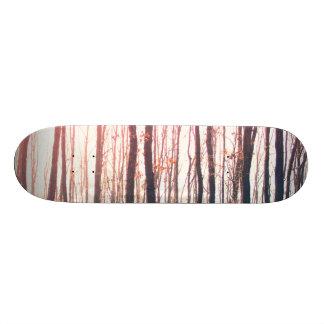 Skate Floresta desencapada