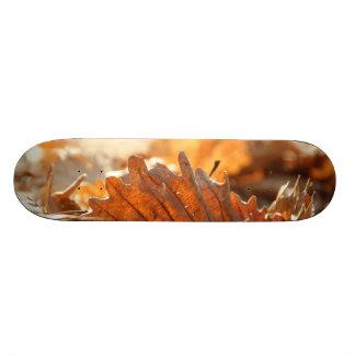 Skate Folha seca