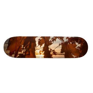 Skate folhas de ácer