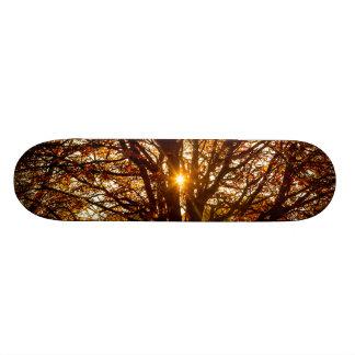Skate Folhas de outono
