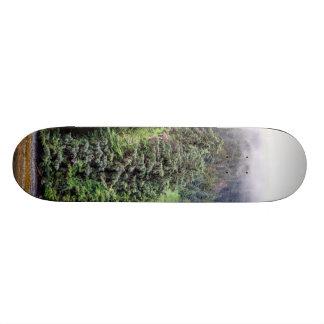 Skate nevoento da floresta
