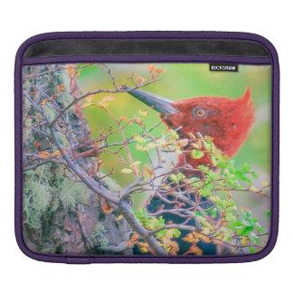 Sleeve Para iPad Pica-pau na floresta que Pecking a árvore