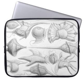 Sleeve Para Notebook Sem-fins de Ernst Haeckel Peridinea