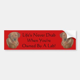 slogan amusing do cão dourado de labrador adesivo para carro