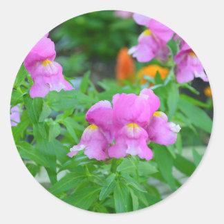 Snapdragon floresce etiquetas lustrosas de | adesivo