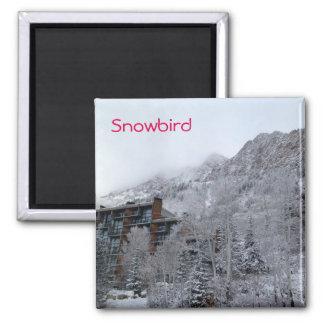 Snowbird Ímã Quadrado