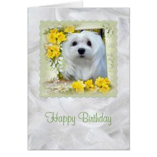 Snowdrop o cartão de aniversário maltês