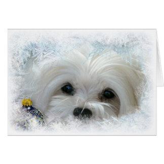 Snowdrop o cartão de Natal maltês