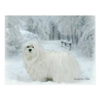Snowdrop o cartão maltês